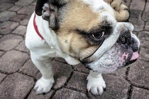 ¿Que quiere decir mi perro? (1)
