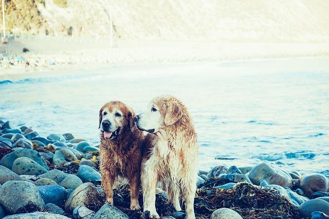 Las relaciones entre perros como una necesidad básica