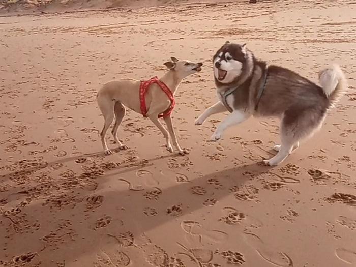 Dos perros en la playa
