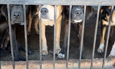 perros estresados en una jaula