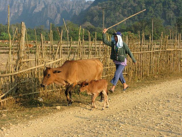 La teoría de la vaca